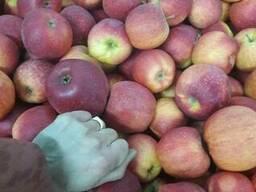 Apples fresh - фото 5