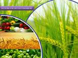 Fabricante e fornecedor de pesticidas em todo o mundo - фото 1